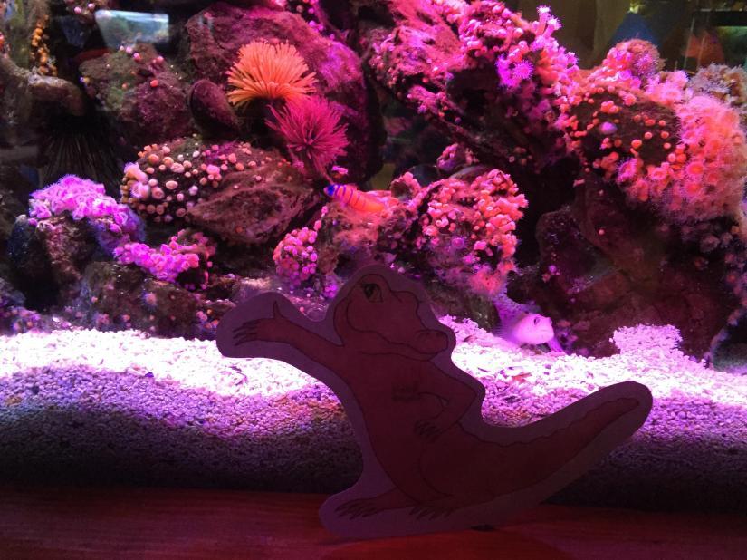 Flat PBA Pink Aquarium April 2017